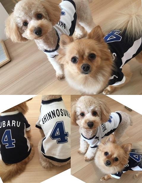 犬服 名入れ 野球ユニフォーム